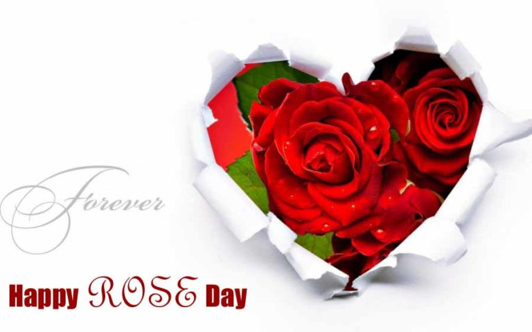 {Love}* Rose Day 2017 Whatsapp & Facebook Status, Dp, Shayari & Poems