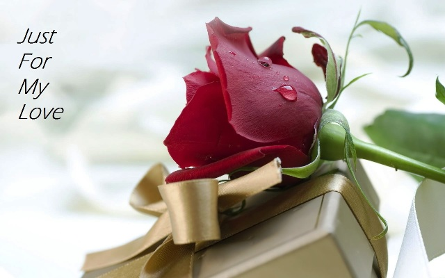 Top # 100+ Rose Day 2017 Wishes, Messages, Quotes & SMS For Lovers